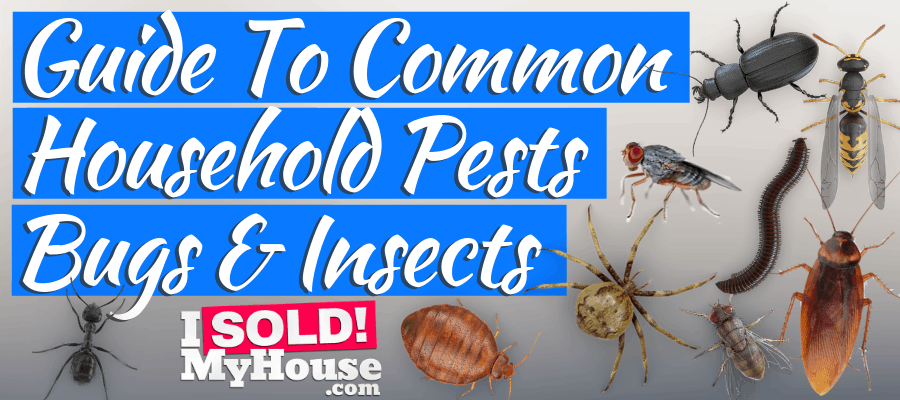 22 Common Household Pests Bugs Insects